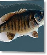Fish Mount Set 10 B Metal Print