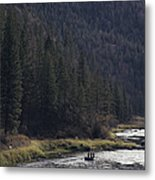 Fishing For Steelhead On The Salmon Metal Print
