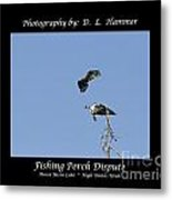 Fishing Perch Dispute Metal Print