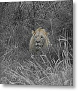 Fit For A King Metal Print