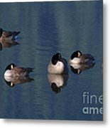 Five Geese Napping Metal Print