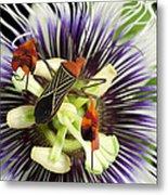 Flag-footed Bug Anisocelis Flavolineata Metal Print