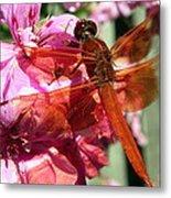 Flame Skimmer Dragonfly Metal Print