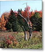 Flames Of Autumn Metal Print