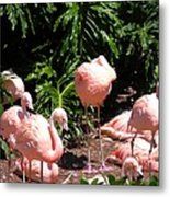 Flamigo Gathering Metal Print
