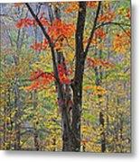 Flaming Fall Foliage Metal Print