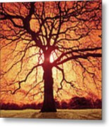 Flaming Oak Metal Print