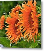 Flaming Sunflowers Metal Print