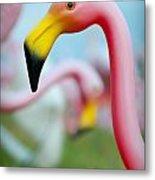 Flamingo 1 Metal Print