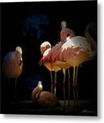 Flamingo 2 Metal Print