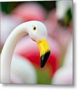 Flamingo 3 Metal Print