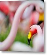 Flamingo 4 Metal Print