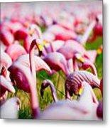 Flamingo 7 Metal Print
