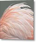 Flamingo Feather Details Metal Print