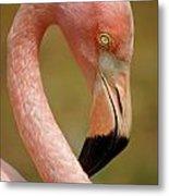 Flamingo Head Metal Print