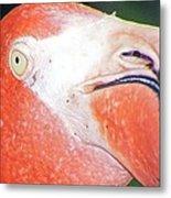 Flamingo Nose Metal Print