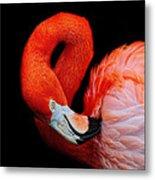 Flamingo Preening Metal Print