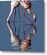 Flamingo Reflection Metal Print