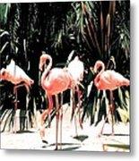 Flamingo Struts Metal Print