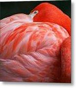 Flamingo Taking A Snooze Metal Print