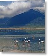 Flamingoes In Crater Lake At Ngorongoro Metal Print