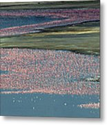 Flamingos Of Lake Nakuru Metal Print