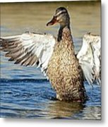 Flapping In The Breeze Metal Print