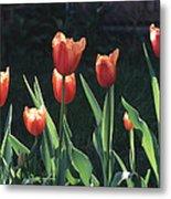 Flared Red Yellow Tulips Metal Print