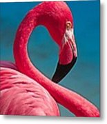 Flexible Flamingo Metal Print