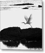 Flight Of The Egret Metal Print
