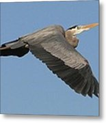 Flight Of The Great Blue Heron Metal Print