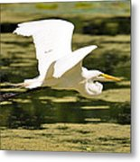 Flight Of The Heron Metal Print