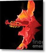 Floating Hibiscus Metal Print