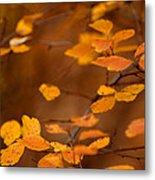 Floating On Orange Fall Leaves Metal Print