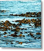 Floating Seaweed Metal Print