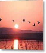 Flock Of Canada Geese Flying Metal Print