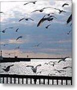 Flocking Gulls Metal Print
