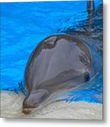 Published Secret Lives Dolphins Metal Print