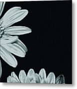 Flora Greetings Metal Print