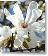 Floral Art Prints White Magnolia Flowers Metal Print