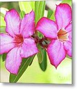 Floral Background. Desert Rose. Metal Print