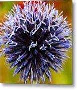 Floral Colors Metal Print