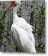 Florida Crane Metal Print