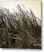 Florida Everglades 6 Metal Print