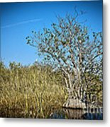 Florida Everglades 8 Metal Print
