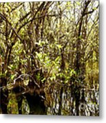 Florida Everglades 9 Metal Print