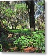 Florida Forest Metal Print