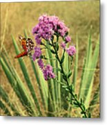 Florida Paintbrush Metal Print
