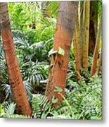 Florida Palms And Ferns Metal Print