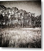 Florida Pine 2 Metal Print